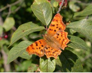 Exposition : Délicats Papillons